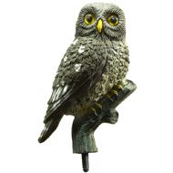 LITTLE OWL DECOY